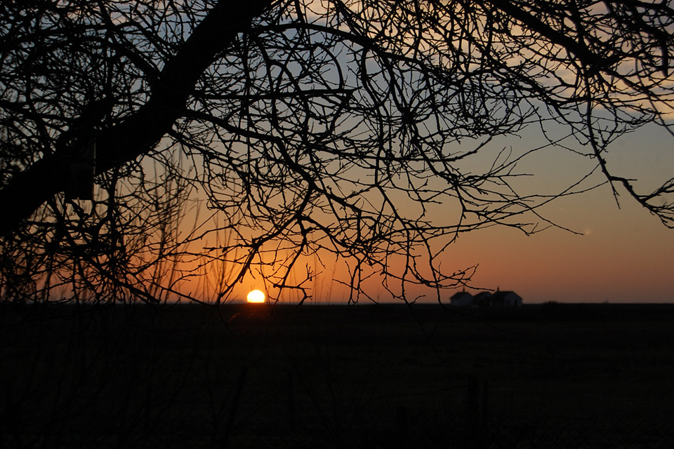 Oxley_dairy_sunrise.jpg